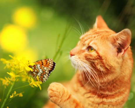 Animals Hunting「Cat with butterfly and flower」:スマホ壁紙(6)
