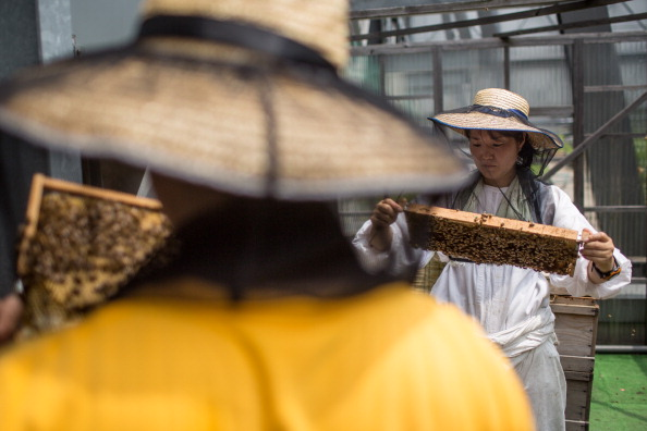 Square Shape「Rooftop Beekeepers Produce Honey In Center of Tokyo」:写真・画像(2)[壁紙.com]