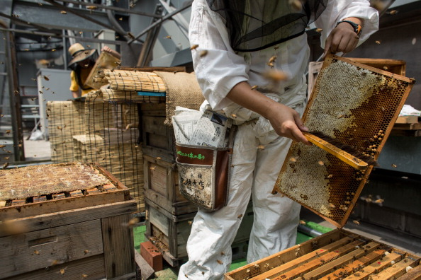 Square Shape「Rooftop Beekeepers Produce Honey In Center of Tokyo」:写真・画像(6)[壁紙.com]