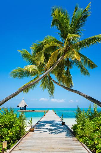 Pier「Jetty at Canareef Resort Maldives, Herathera island, Addu atoll, Maldives」:スマホ壁紙(18)