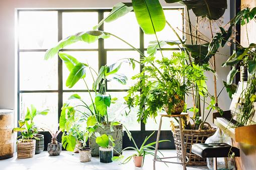 Rainforest「Midcentury modern scandinavian eco lodgle like interior with a lot of green plants and barn wood walls. Piano visible.」:スマホ壁紙(19)