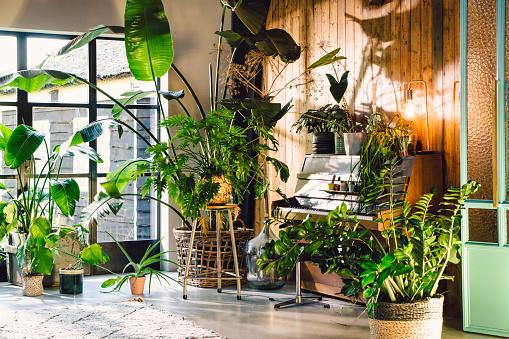 Houseplant「Midcentury modern scandinavian eco lodgle like interior with a lot of green plants and barn wood walls. Piano visible.」:スマホ壁紙(6)
