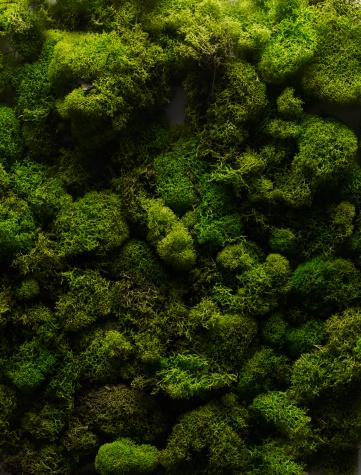 Moss「Moss」:スマホ壁紙(2)
