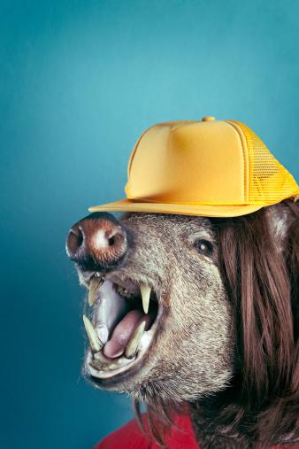 縁なし帽子「大きな不敵ヒルビリー猪ヘッド」:スマホ壁紙(6)