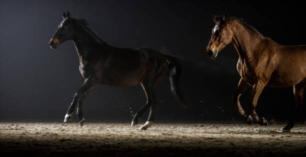 Horses cantering in the riding hall at night:スマホ壁紙(壁紙.com)
