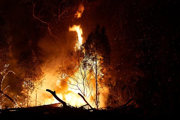 オーストラリア「Emergency Warning Issued For Hawkesbury As Bushfire Nears Sydney Outskirts」:写真・画像(5)[壁紙.com]
