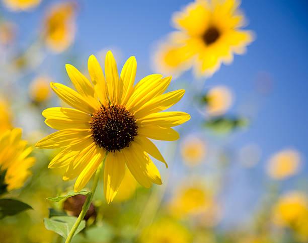 Yellow Flower:スマホ壁紙(壁紙.com)