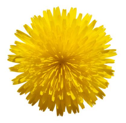 花「イエローのフラワー白で分離」:スマホ壁紙(8)