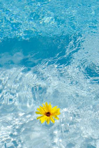プール「黄花のリラックスプール」:スマホ壁紙(14)
