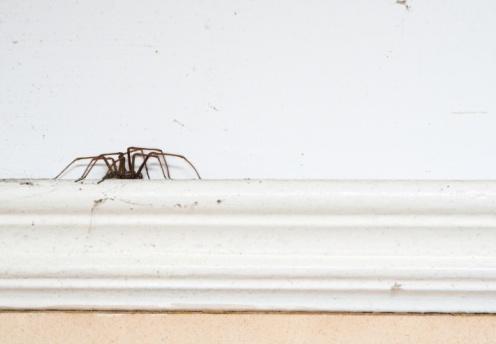 Animal Hair「Spider On A Picture Rail」:スマホ壁紙(7)
