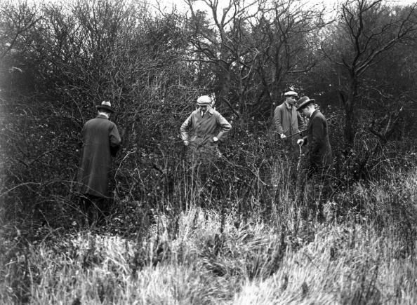 Searching「Searching Woodland」:写真・画像(11)[壁紙.com]