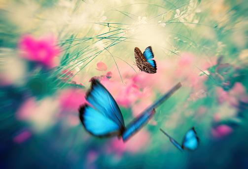 Beauty In Nature「Butterfly Garden」:スマホ壁紙(15)