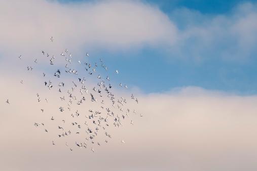 アマードビーチ「Portugal, Swarm of pigeons」:スマホ壁紙(2)