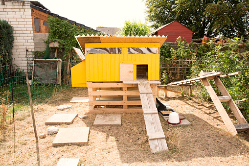 Free Range「Chicken house in garden」:スマホ壁紙(15)