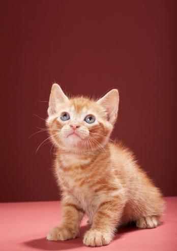 Kitten「Portrait of kitten looking up」:スマホ壁紙(0)