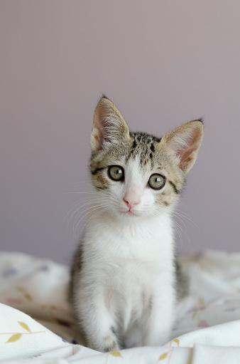 Sitting「Portrait of a cat sitting on a quilt」:スマホ壁紙(15)