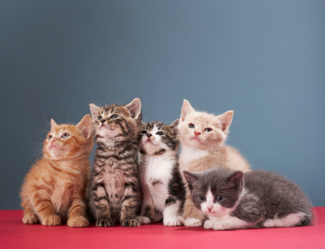 子猫「Portrait of group of kittens」:スマホ壁紙(13)