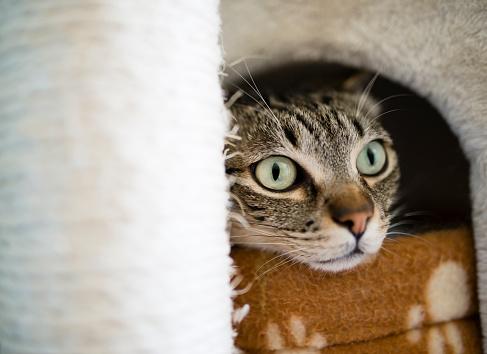 Peephole「Portrait of tabby cat peeking out of lair」:スマホ壁紙(11)
