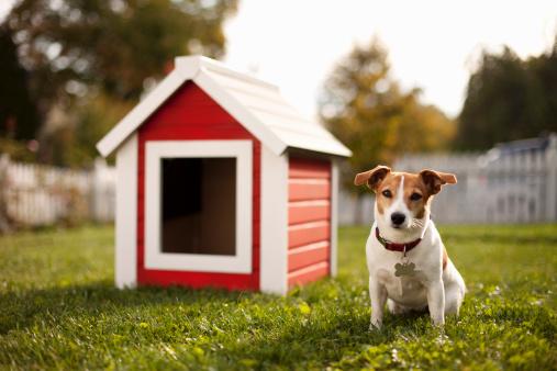 Loyalty「Portrait of dog with dog house」:スマホ壁紙(18)