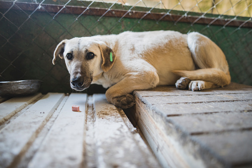 Animal Eye「Portrait of scared dog in animal shelter」:スマホ壁紙(1)