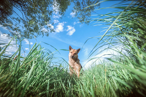 Leaning「Portrait of dog looking down at grass」:スマホ壁紙(11)