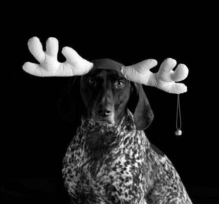 Bell「Portrait of Dog Wearing Antlers with Bell, Black and White」:スマホ壁紙(1)