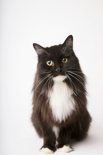 Looking At Camera「Portrait Of A Black And White Cat」:スマホ壁紙(12)