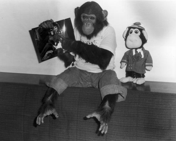 Monkey「Bubbles, The Chimpanzee」:写真・画像(8)[壁紙.com]