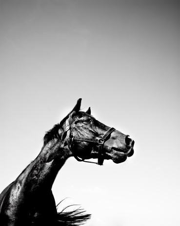 Horse「Portrait of Horse, Black and White」:スマホ壁紙(10)