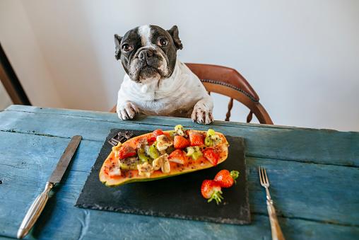 Kiwi「Portrait of french bulldog at table with plate of papaya and fruits」:スマホ壁紙(17)