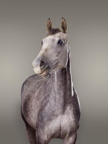 Horse「Portrait of a horse」:スマホ壁紙(19)