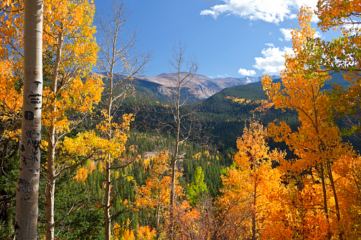 Arapaho National Forest「Portrait of Colorado landscape in fall with colored leaves」:スマホ壁紙(2)