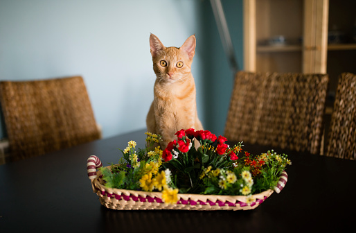 子猫「Portrait of tabby cat sitting behind basket with plastic flowers on a table」:スマホ壁紙(17)