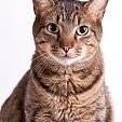 雑種のネコ壁紙の画像(壁紙.com)