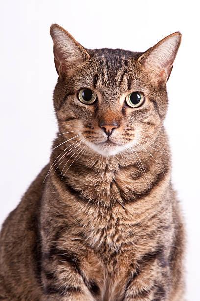 Portrait of a Cat:スマホ壁紙(壁紙.com)