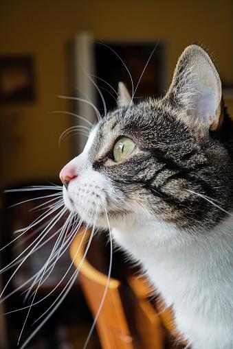 Kitten「Portrait of a cat」:スマホ壁紙(1)