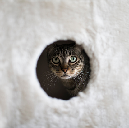 Scratching Post「Portrait of a cat looking through hole of a scratching post」:スマホ壁紙(6)