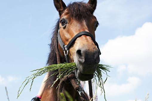 Grazing「Portrait of eating horse」:スマホ壁紙(8)