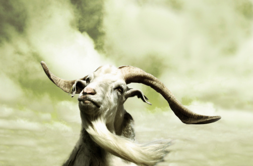 Sepia Toned「Portrait of Goat with Long Beard, Toned」:スマホ壁紙(14)