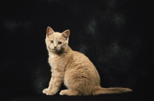 子猫「Portrait of Kitten」:スマホ壁紙(14)