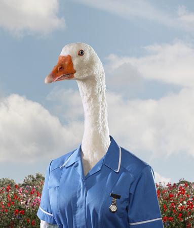 Bizarre「Portrait of a goose dressed as a nurse」:スマホ壁紙(16)