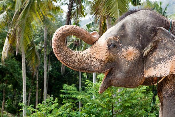 portrait of an elefant holding up his trunk:スマホ壁紙(壁紙.com)