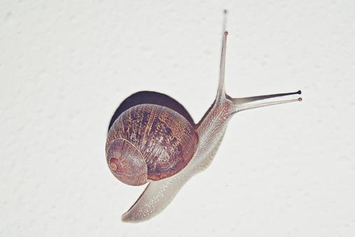 カタツムリ「Portrait of a snail」:スマホ壁紙(13)