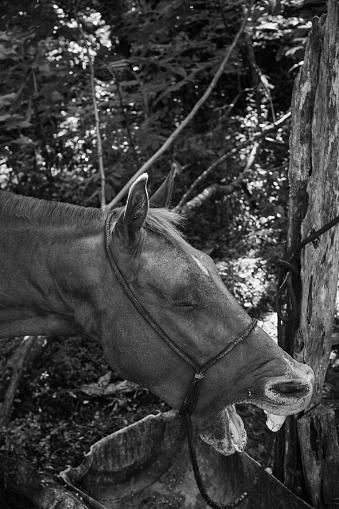 Stallion「Portrait of Horse」:スマホ壁紙(13)
