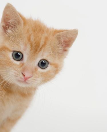 子猫「Portrait of a kitten」:スマホ壁紙(4)