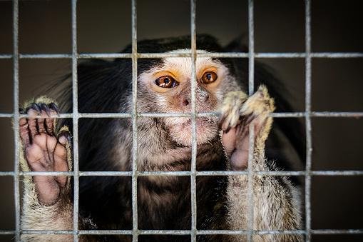 Prisoner「Portrait of captured small monkey」:スマホ壁紙(15)