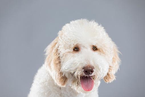 White Color「フレンドリーな家族犬の肖像画」:スマホ壁紙(17)
