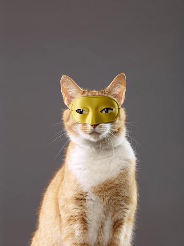 Mask - Disguise「Portrait of a cat wearing a mask」:スマホ壁紙(18)
