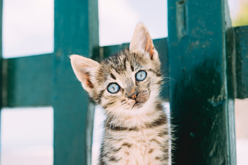 Kitten「Portrait of tabby kitten in front of green fence」:スマホ壁紙(15)