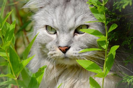 Kitten「Portrait of a cat sitting amongst plants」:スマホ壁紙(13)